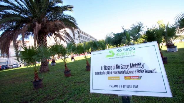 No Smog Mobility, nuovi alberi a Palermo