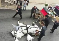 Palermo, il cavallo traina la carrozza degli sposi ma stramazza a terra davanti alla chiesa