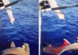 Pescano lo squalo e poi gli sparano per divertimento: il video che indigna il web