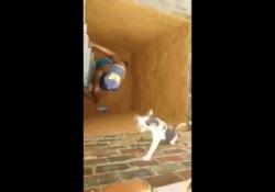 Scende nel cunicolo per salvare il gattino, ma succede qualcosa che nessuno si aspetta