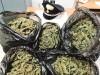 Catania, scoperti 146 chili di marijuana pronti ad essere spacciati: due arresti