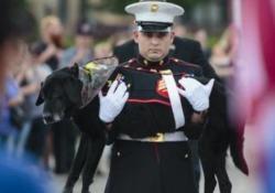 Usa, l'addio a Cena: per il cane dei marine la cerimonia di un veterano