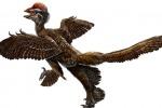 I dinosauri piumati erano minacciosi ma morbidi come peluche
