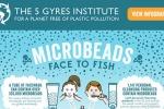 Appello ambientalisti, stop alle microplastiche nei cosmetici