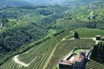 Nasce SalvaTerra day, think tank su sostenibilità vino e territori