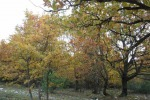 Via libera da Cdm a Testo unico Foreste e riforma Agea
