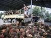 Olio palma: Campagne Liberali, solo guerra commerciale