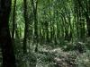 Trovata la formula del profumo del bosco