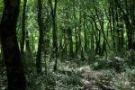 Stesura dei piani di gestione forestale, pubblicato il bando da un milione di euro