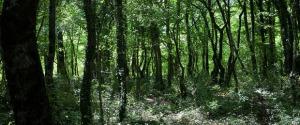 Una molecola racchiude il segreto del profumo del bosco (fonte: Simone di niro)