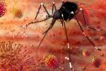 Via libera negli Usa a zanzare 'killer' contro virus Zika