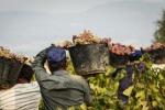 Giro di vite contro il caporalato nel Siracusano, sospesa un'azienda agricola
