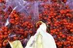 Capodanno: agrifoglio superstar, cresce mercato fiori +1,40%