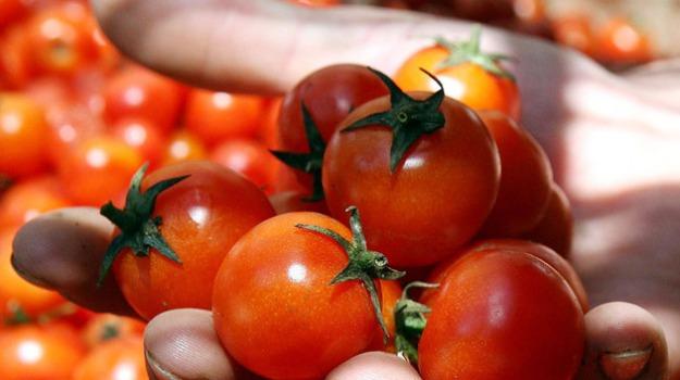furto di pomodorini, pomodorini Hathor, pomodoro igp, Portopalo di Capo Passero, Siracusa, Cronaca