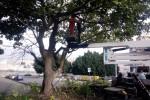Operai al lavoro, potati gli alberi di largo Guastella a Catania: le foto