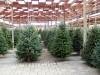 Alcamo, 35 mila euro per gli eventi di Natale