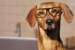 """I cani hanno più neuroni dei gatti: a svelarlo il primo """"censimento"""" delle cellule nervose"""