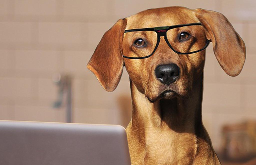 I cani sono più intelligenti dei gatti: merito delle cellule cerebrali