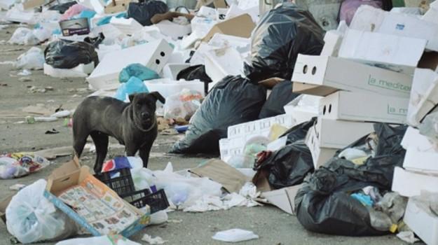 emergenza rifiuti agrigento, rifiuti a licata, Srr Ato 4 Agrigento Provincia Est, Maria Grazia Brandara, Agrigento, Cronaca