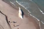 Sassari, balena spiaggiata da 45 giorni: rimuoverla costa 100mila euro