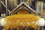 Protocollo d'intesa per aumentare grano duro italiano