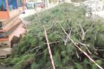 A Trapani è allarme per gli alberi abbattuti