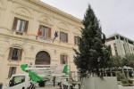 L'albero nella piazza Vittorio Veneto di Trapani