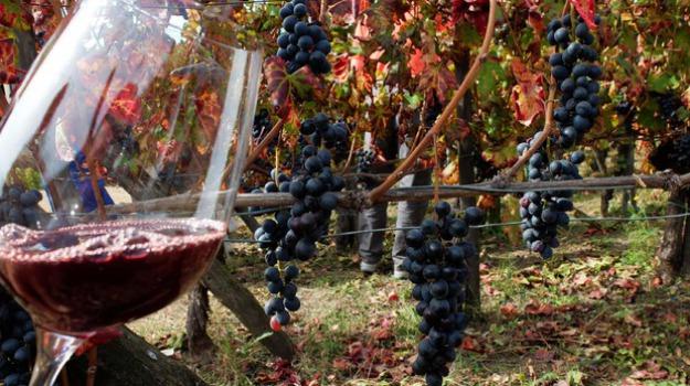 Città del vino Noto Pachino, Siracusa, Economia