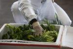 Hausmann, nel Lazio semplificato piano assicurativo agricolo