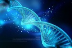 La rete genetica alla base della durata del sonno