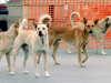 Per sfuggire a branco di cani randagi si tuffano in mare, paura a Gela