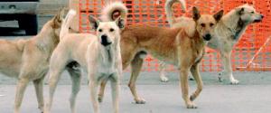 Partanna, donna aggredita da un gruppo di cani randagi