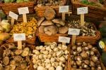 Nei funghi un potenziale antiaging, merito degli antiossidanti