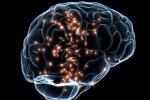 Nel cervello i primi chip che controllano l'umore
