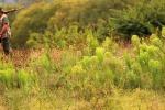 Manovra: ong animaliste, no ad allentamento vincoli a caccia