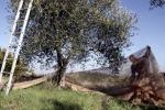 Maratona dell'Olio in 13 comuni in provincia di Terni