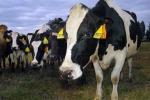 La Cina rimuove dopo 16 anni il bando sulla carne bovina italiana