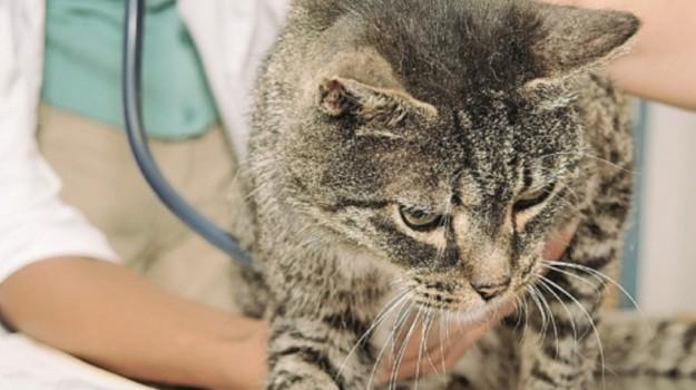 gatto aids campobello mazara, Trapani, Società