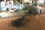 Ancora danni per il vento in Sicilia, alberi caduti nel Palermitano. Cancellate le corse per le Egadi
