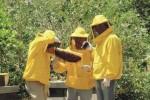 Dopo vino e olio nella Valle si produce anche il miele Diodoros