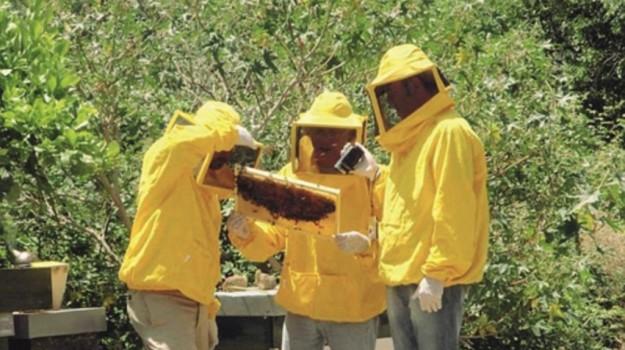 miele diodoros, Agrigento, Economia