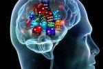 Scoperto il lato 'spericolato' del cervello, ama il gioco d'azzardo