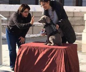"""In Museo Boston un cane """"conservatore"""""""