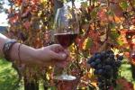 Centenario nascita Paolo Desana, 'padre' delle Doc del vino