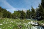In Trentino benedizione del sale a Vigo di Ton