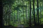 Le foreste perdute dell'Europa