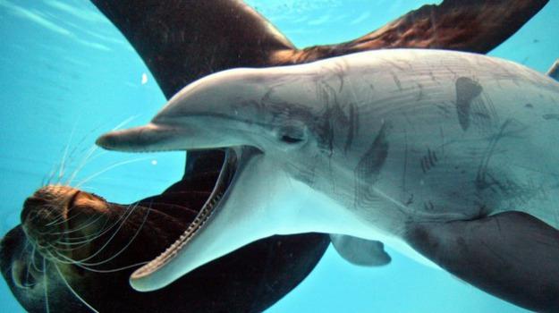 In gazzetta via libera al nuoto nei delfinari protesta - Zoomarine bagno coi delfini ...