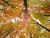 Metà delle foreste europee è scomparsa, complice lagricoltura