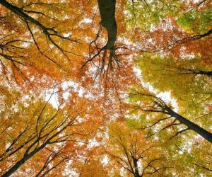 Metà delle foreste europee è scomparsa, complice l'agricoltura