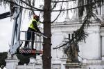 Natale: Coldiretti, in rottamazione 3,8 milioni di alberi
